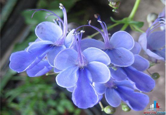 белые букеты и голубые бабочки. Обсуждение на LiveInternet ...