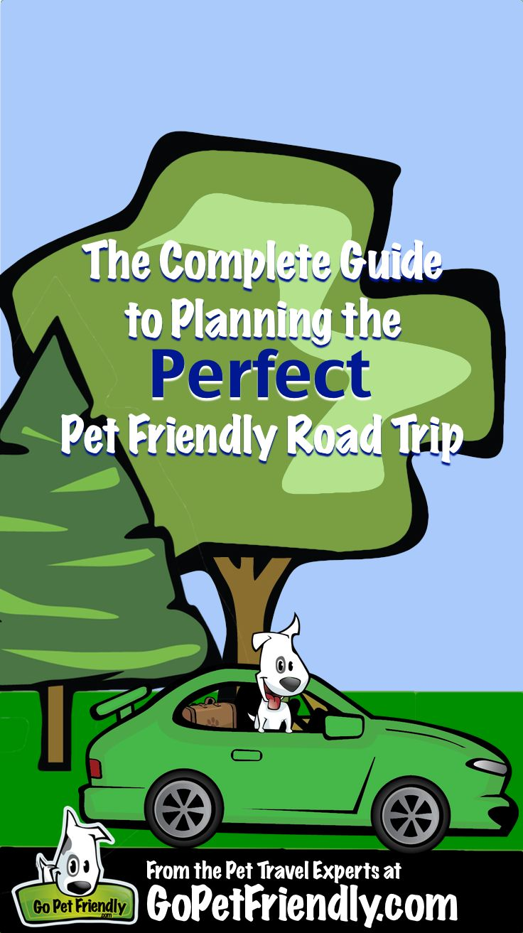 The complete guide to planning the perfect dog friendly road trip