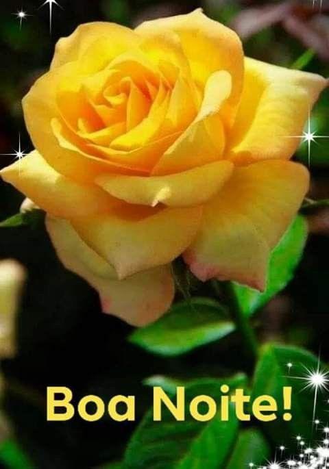 Boa noite | Rosas, Rosas amarelas e Flores