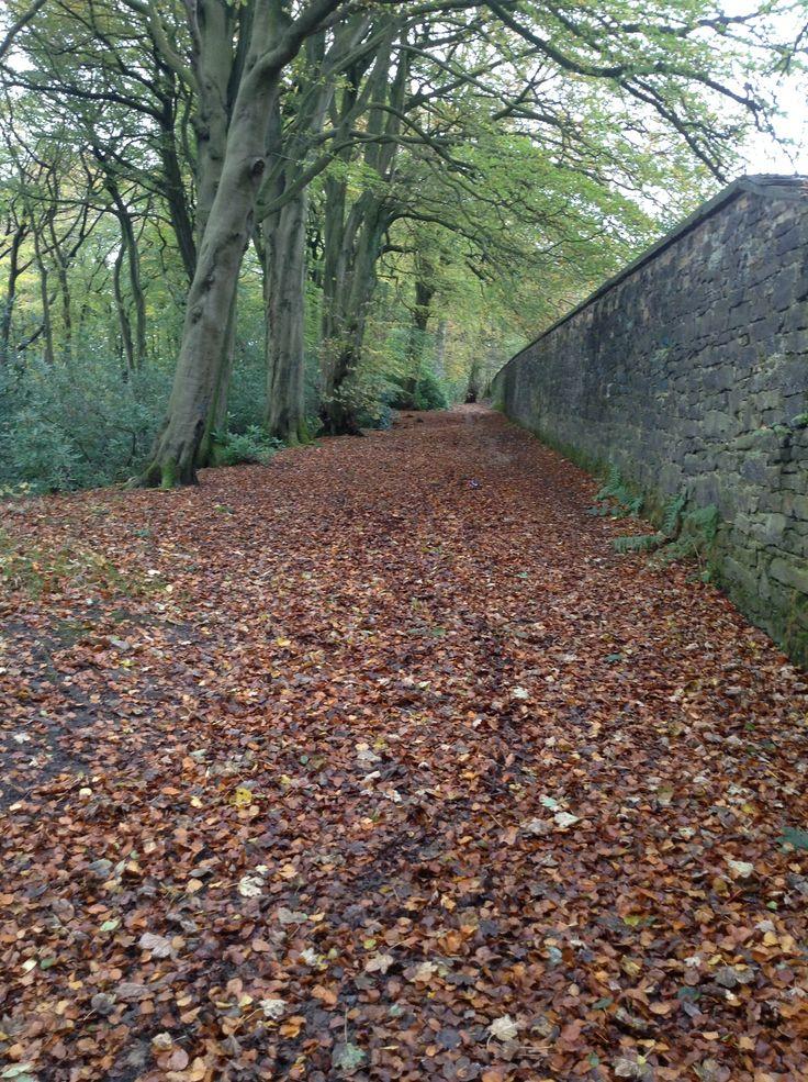 Autumn pathway..
