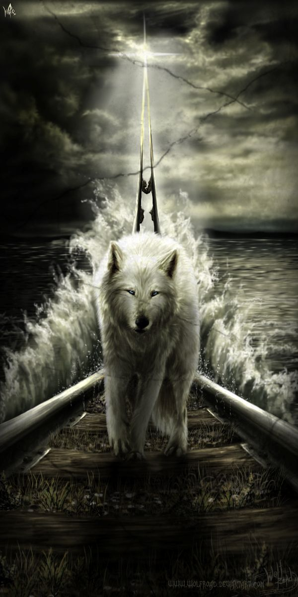 Wolf with water
