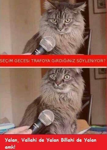 Kedi röportajları