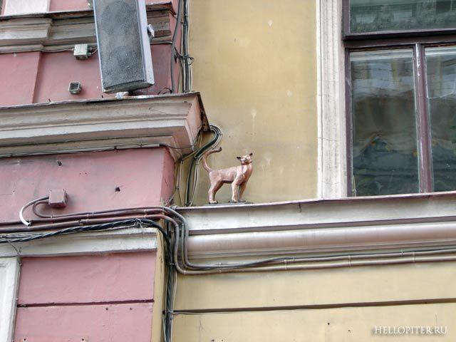 Кошка Василиса на Малой Садовой(напротив кота Елисея)