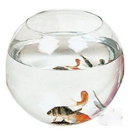 Les 25 meilleures id es de la cat gorie aquarium pour for Vente de poisson rouge grenoble