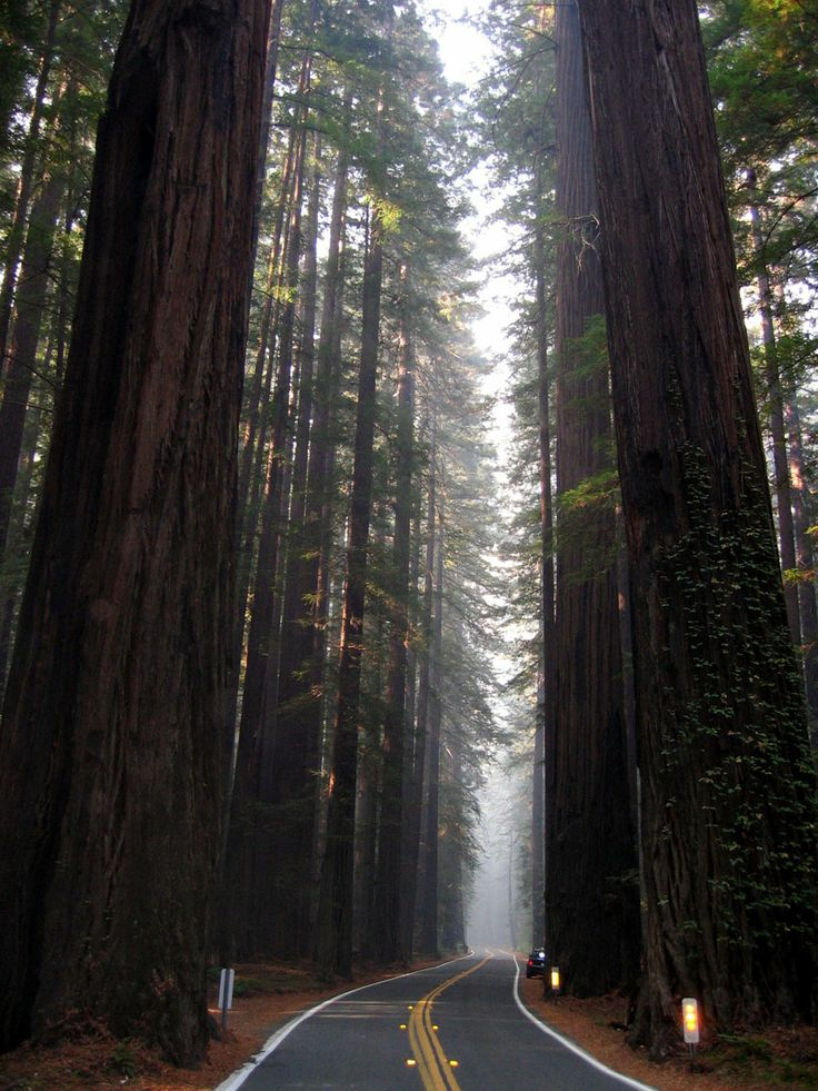 Driving through the Redwood National Park California