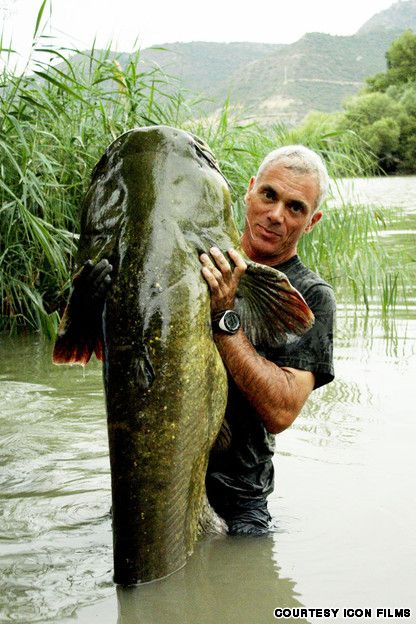 A man-sized catfish hauled from the murky depths by Jeremy Wade - Ebro River, Spain - http://travel.cnn.com/jeremy-wades-ten-best-rivers-catching-monster-fish-357931