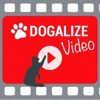 #dogalize Selfie Cat: Un video divertente con il nostro gatto #dogs #cats #pets
