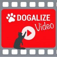 #dogalize Selfie Cat: Un video divertente con il nostro gatto #dogs #cats #pets