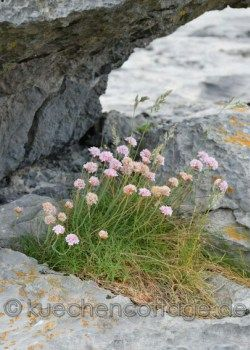 West- und Südküste #irland #westküste #küste #urlaub #reise #rundreise #fotografie #blog