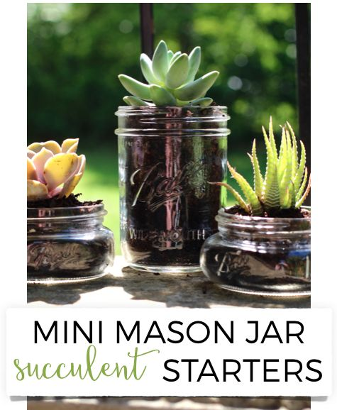 101 Handmade Days: Mini Mason Jar Succulent Starters - Busy Being Jennifer