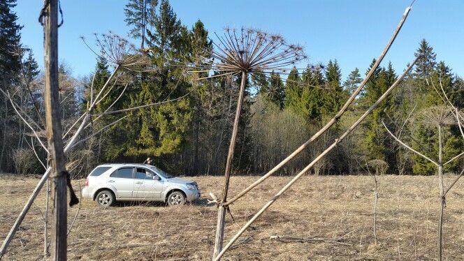 Килькино поле. Елизаветино, Гатчинский район, Ленинградская область.