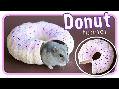 Frosted Donut Tunnel | DIY Hamster Toy – YouTube