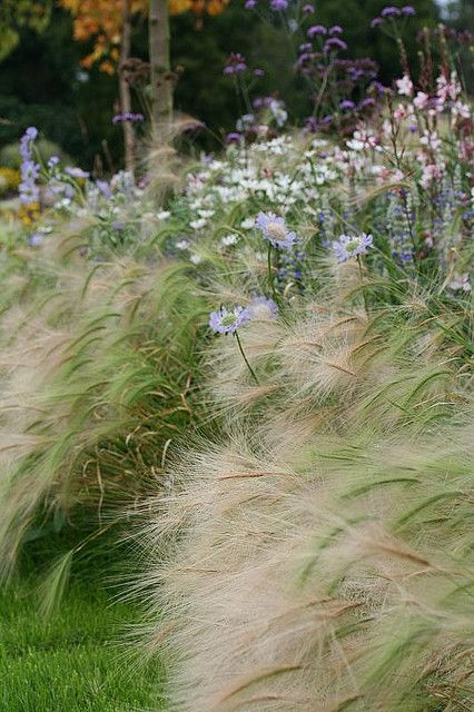46 best fields of flowers images on pinterest gardens for Ornamental grass border plants