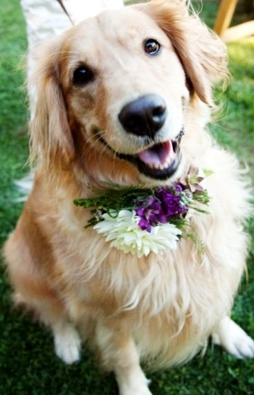 #Weddingdog #Golden #flowers ToniK ❀Flowers in their coats❀