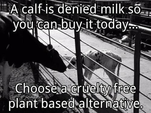 """veganmovement2012:    """"Dairy industry cant have all the babies sucking up all the milk that was meant for them when they'd rather sell it to you instead"""" - Gary Yourofsky"""