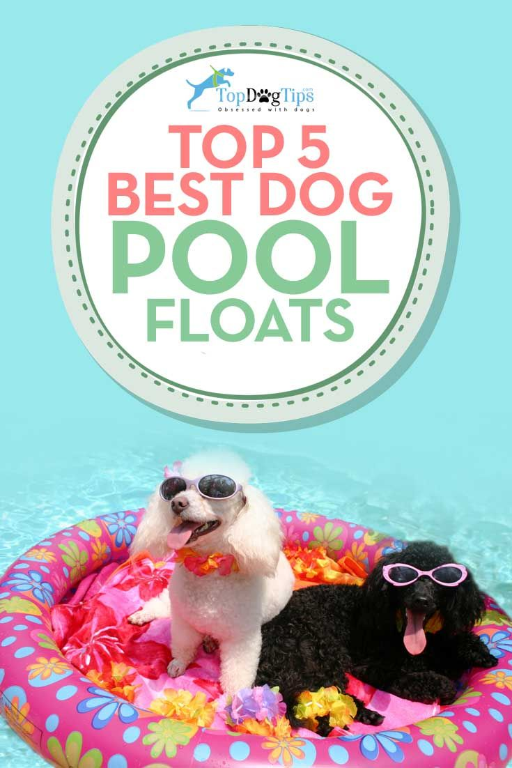 Top Best Pool Floats for Dogs to Swim On. Our dogs love to be in the pool, but treading water for long periods of time will tire them out. These best pool floats for dogs will allow your pet to float happily around the pool without the risk of becoming overtired. You'll be able to enjoy long afternoons lounging around in the water with your best furry friend. #dogs #pools #dogpool #poolfloats #pets