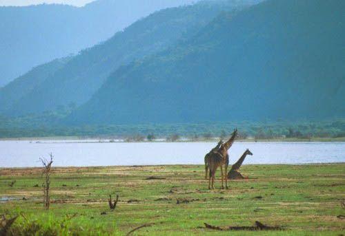 Parc national du lac Manyara !