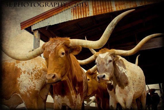 Western Art Rustic Fine Art Photography-Texas Longhorns-Southwest Fine Art Prints