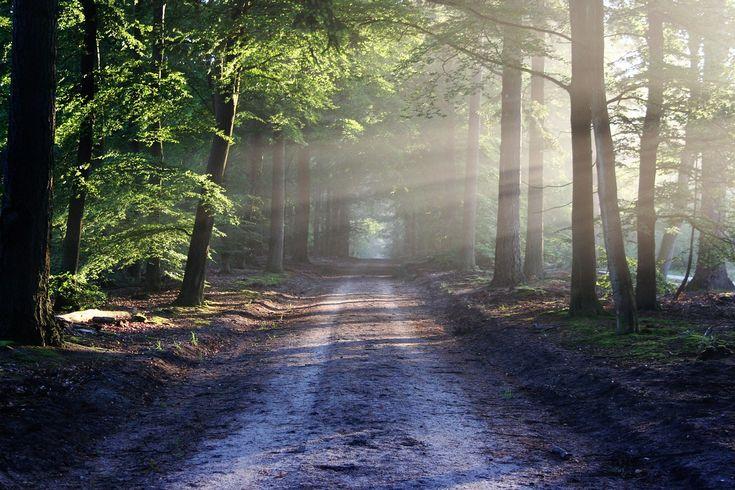 Foto di un percorso nella foresta