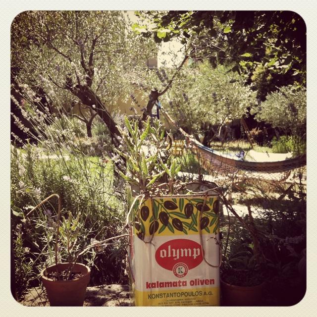 My garden @Casalil