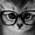 Qué los gatos siempre caen parados? Si los gatos caen de un lugar no muy elevado, pueden acomodar su cuerpo y caer parados, pero sí ellos se precipitan de una gran altura pueden lastimarse gravemente o tener lesiones fatales. El número de gatos que...