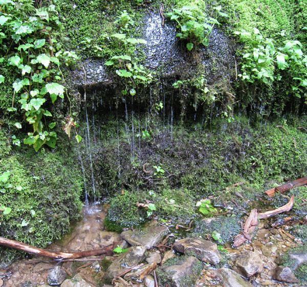 How to make a drip/waterfall set up?-salamander-75-gallon-waterfall-concept.jpg