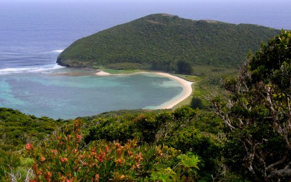 We're helping to combat Lord Howe Island's crofton weed problem by introducing it's natural enemy, the rust fungus.