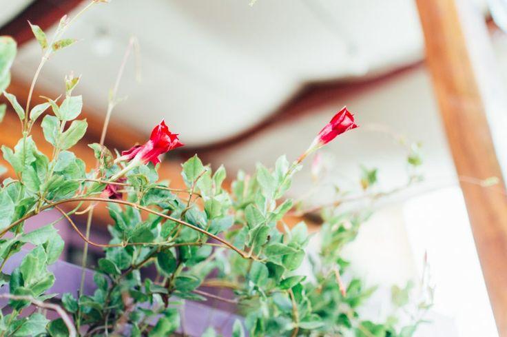 Dica de Café Bristô em Goiânia: Las Nenas #flower #photography