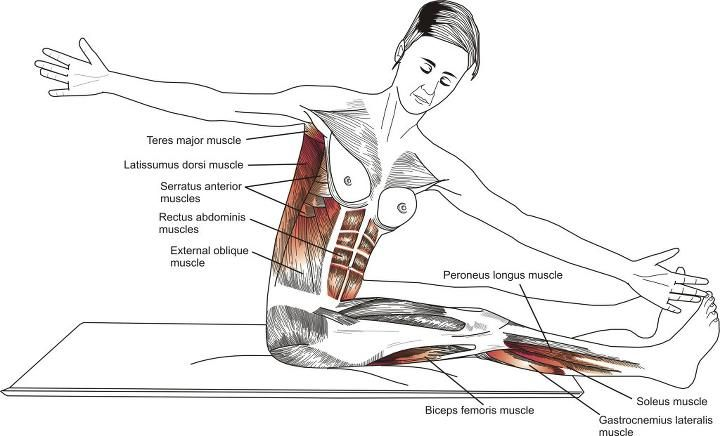 Muscles used during Pilates Saw exercise