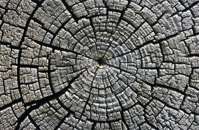 dig it find it old: How archaeologists use tree rings to uncover histo...