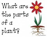 Parts of a Plant Primary Writing Activity