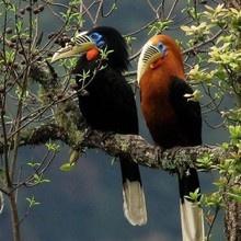 Tierwelt Südamerika/Paraguay