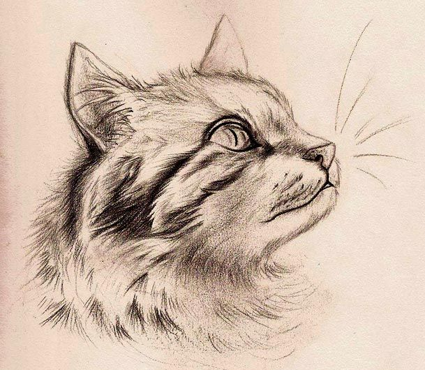 Original: Please refer to the original photograph for comparison. One of my favorite photographers on deviantArt took a lovely picture of a cat, and I absolutely had to draw it. The original compos...