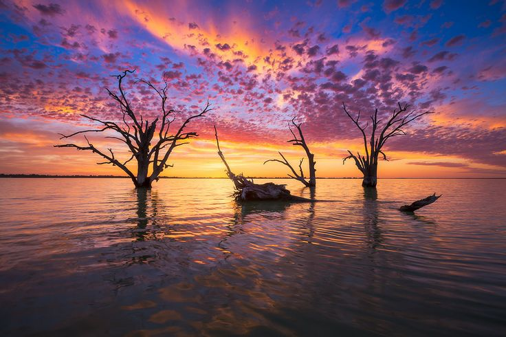 500px / Color Explosion by Dylan Gehlken: Lake Bonney, Barmera, South Australia.