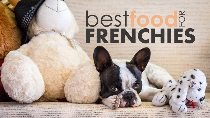 French bulldogs are funny little buggers with personalities that run the gamut. Hyperactive Frenchies are just as common as total couch potatoes. There's also a fairly large range of sizes (from 16lbs all the way up to 28lbs). If you're trying to find the best food for your French bulldog, that can be a lot …