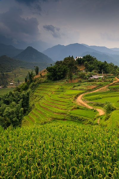 Rice terraces and dramatic landscape surrounding Cat Cat village, located near to Sapa in the Muong Hoa Valley in Vietnam.