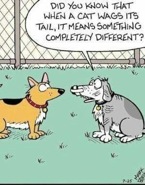 12 Clever Comics About Cats And Dogs That Are Too Funny Not To See  12 Clever Comics About Cats And Dogs That Are Too Funny Not To See