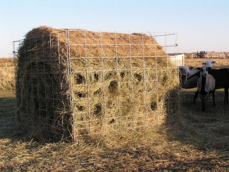 Hay Truck Shelter : L bar j aussies the best hay feeder for sheep