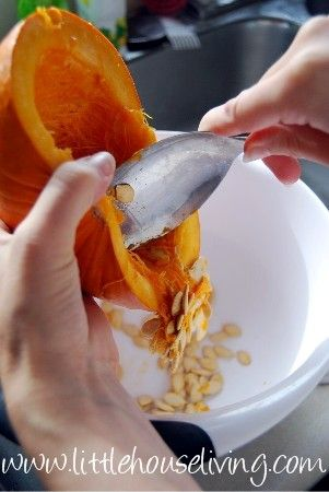 preserving pumpkin