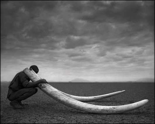 The last of the giants. Great photo by Nick Brandt but still sad.
