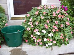 Any basket or bucket with holes would work. Great idea!