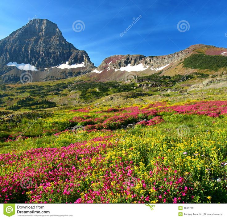 Alpine Meadows Management | Hidden Lake Trail, Logan Pass, Glacier National Park, Montana, United ...