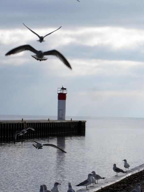 sea-passion:  Gulls flying in front of a Port Dover lighthouse , Ontario, Canada
