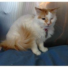 Ellie | Animal Rescue Force of South Florida Inc. | West Palm Beach, Florida | Pets.Overstock.com
