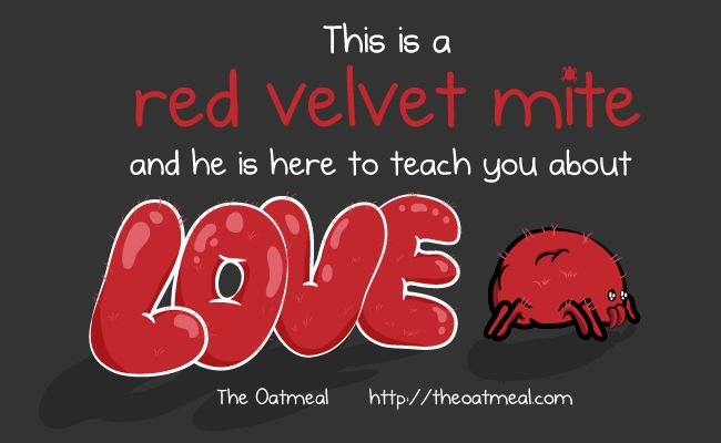 GO check this out here: http://theoatmeal.com/comics/red_velvet_mite This is a red velvet mite and he is here to teach you about love - The Oatmeal