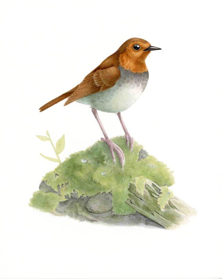 Japanese robin : Acrylic コマドリ:アクリル絵具