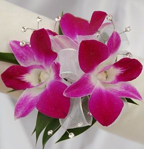orchids with magenta and white - Google Search