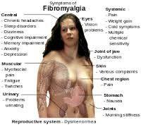 fibro3
