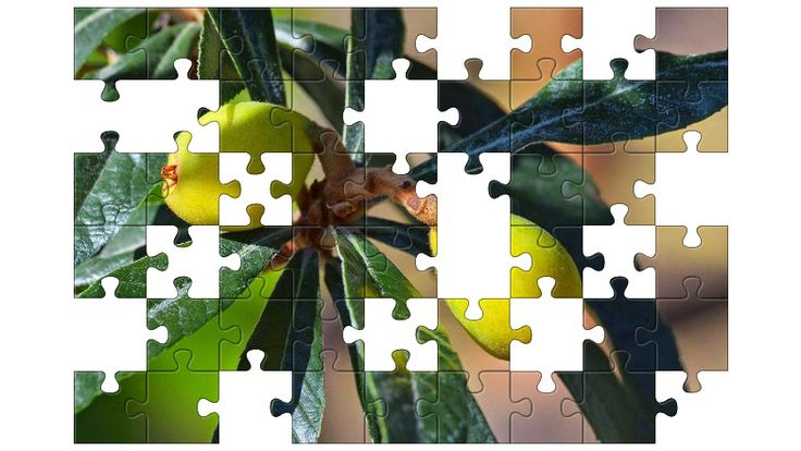 Free Jigsaw Puzzle Online - Loquat  #Game #JigsawPuzzle #Puzzle #freegame