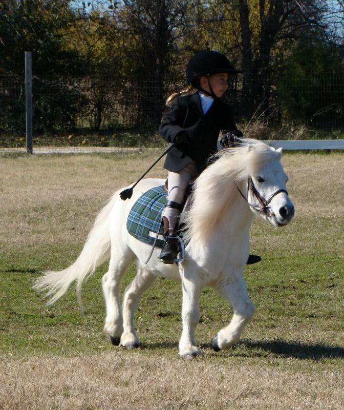 Horse show: